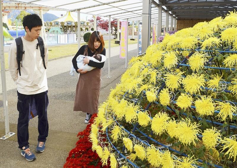 満開の千輪菊を楽しむ来場者=11月6日、越前市武生中央公園