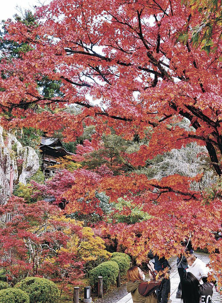 木々が鮮やかに色づき、見頃を迎えた境内=小松市の那谷寺