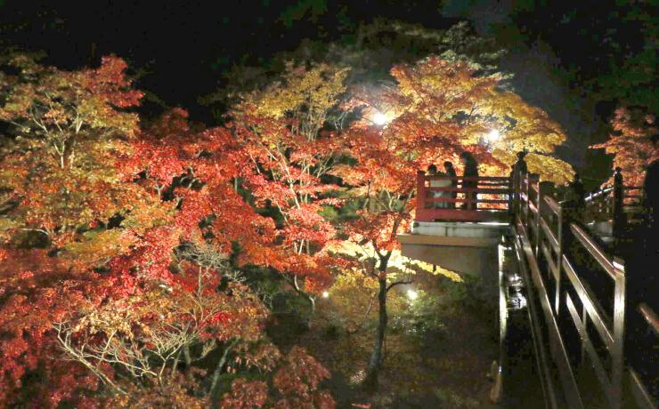 ライトアップされた弥彦公園観月橋周辺のモミジ=10日、弥彦村弥彦