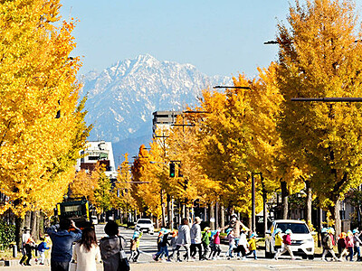 輝くイチョウと剱岳 富山の平和通り