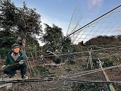 片野鴨池 伝統の坂網猟でマガモ捕獲