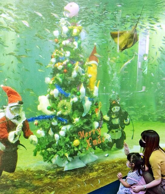 水槽内に設置されたクリスマスツリー=11月18日、福井県坂井市の越前松島水族館