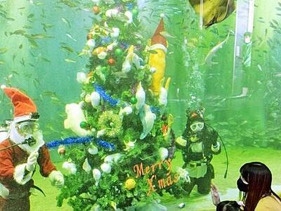 松島水族館に水中クリスマスツリー サンタも登場 福井県