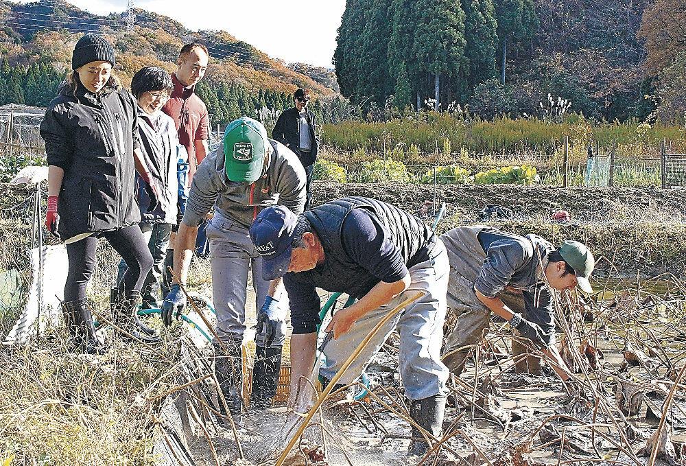 レンコンの収穫体験に臨む参加者=小松市滝ケ原町