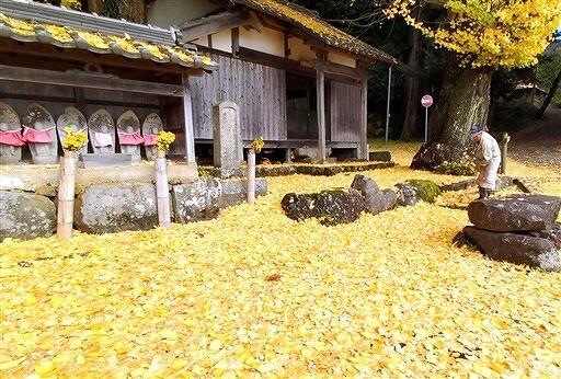 イチョウの葉に覆い尽くされた観音堂の境内=11月24日、福井県高浜町今寺