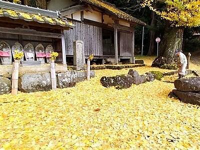 境内染まる晩秋の黄色 高浜町の観音堂にイチョウの葉