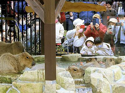 カピバラ 露天風呂でゆ~ったり 富山市ファミリーパーク