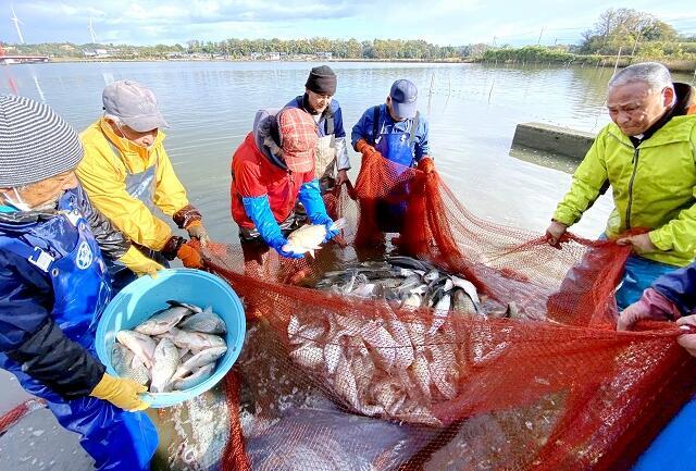 寒ブナを水揚げする漁師たち=12月1日、福井県あわら市の北潟湖