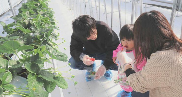 摘みたてのイチゴを味わう親子連れ