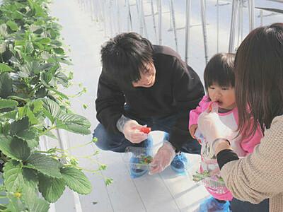 佐久市街地でイチゴ狩りいかが 岩村田に観光農園