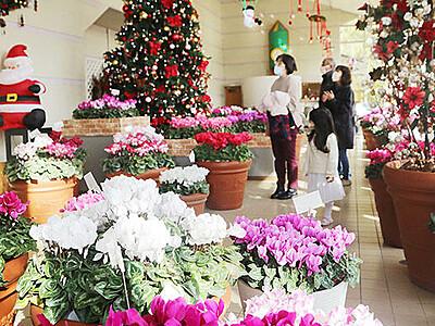 香り華やぐクリスマス 砺波の富山県花総合センター