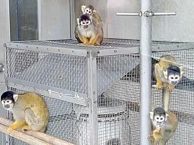 リスザルぽかぽか、待望のストーブ設置 暖を取る姿に来園者もほっこり 福井県の西山動物園【ふくジェンヌ】