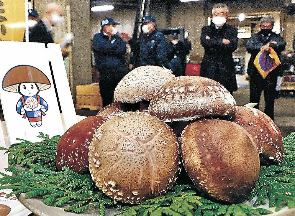 過去最高の1箱26万円で競り落とされた「のとてまり」のプレミアム=金沢市中央卸売市場