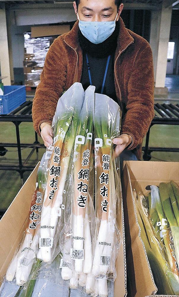 初出荷が始まった「能登鍋ねぎ」=七尾市中島町のJA能登わかば北部集出荷場