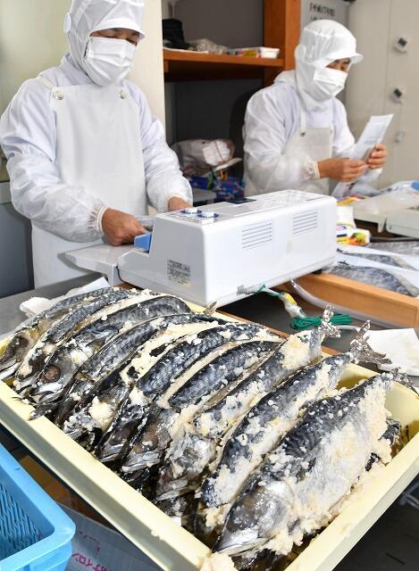 熟成したる上げされた「鯖の熟れ鮨し」=12月19日、福井県勝山市北谷町北六呂師の加工場