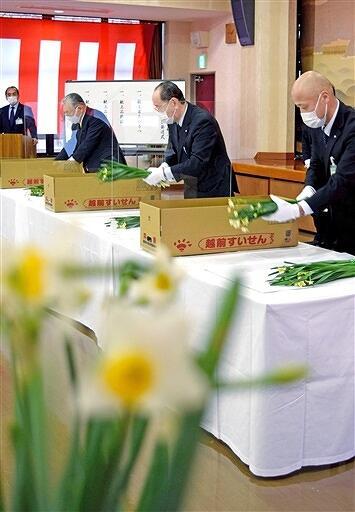 常陸宮家に献上する越前水仙を選ぶ関係者=12月24日、福井県南越前町河野事務所
