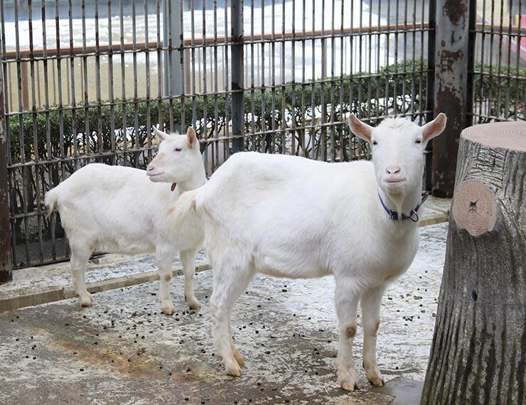 新たに仲間入りしたキイタ(右)とキイコ=高岡古城公園動物園