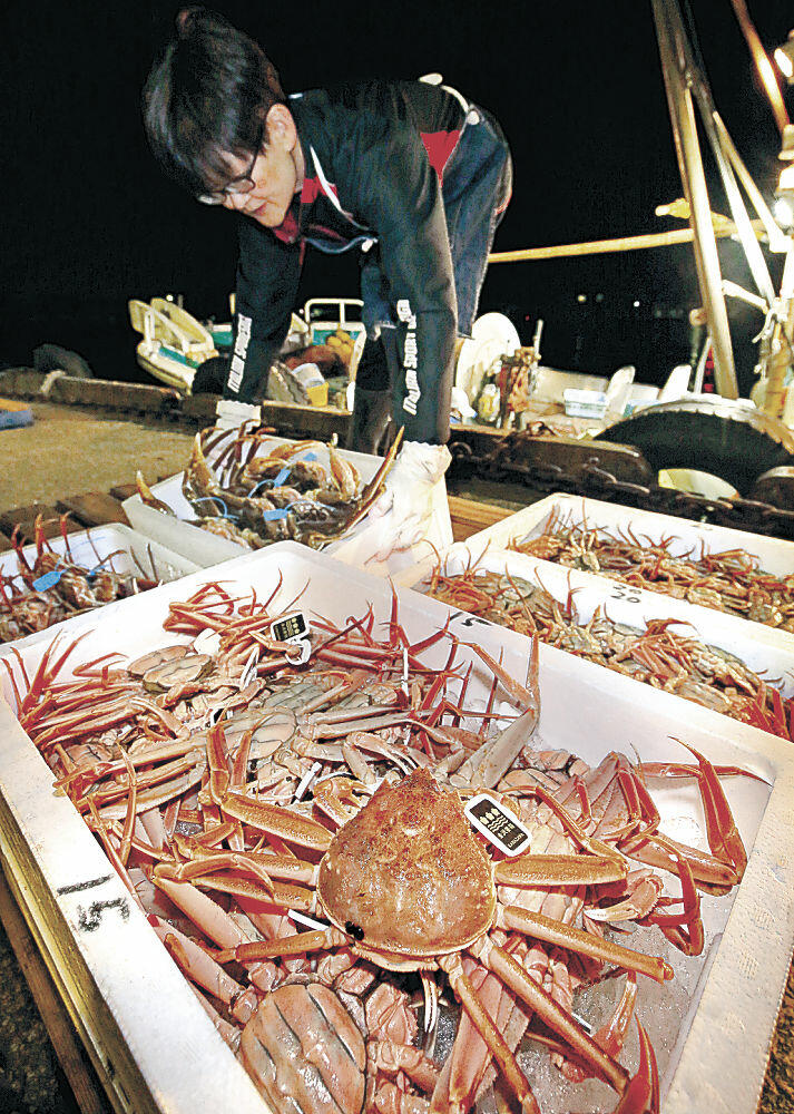 漁期の最終日を迎えたコウバコガニの水揚げ=金沢港