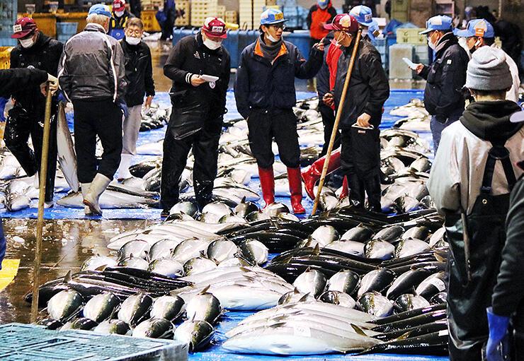 今年最後の競りにかけられたひみ寒ぶり。今季の累計は3万本を超えた=氷見魚市場