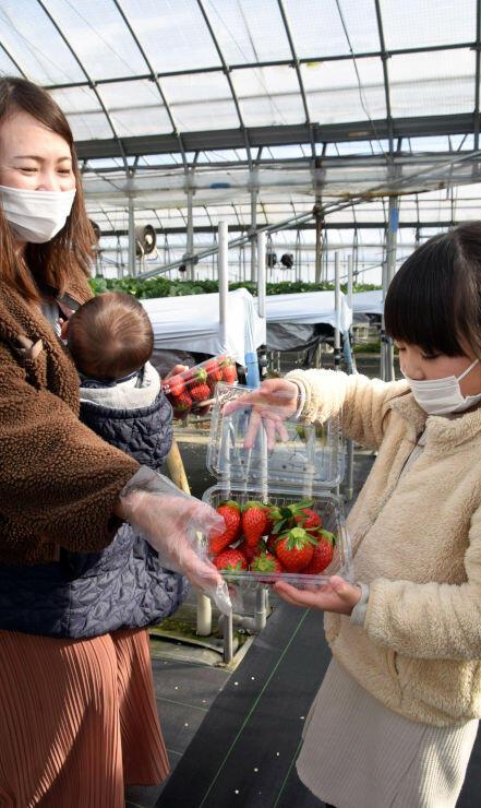 大粒のイチゴをパックに詰める親子連れ