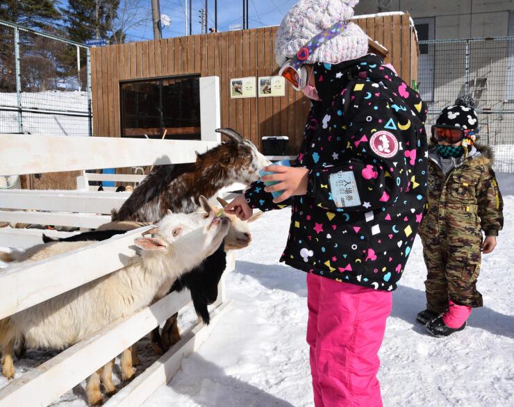 「冬のふれあい動物広場」でヤギに餌をやる子ども