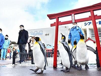 ペンギンかわいく厳かに 坂井市の水族館で恒例の「初詣」