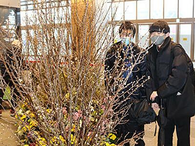 季節の草花で富山駅彩る 山田特産「啓翁桜」など600本