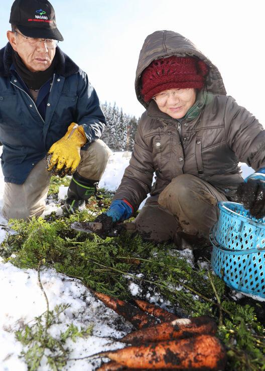 雪の下で育てていたニンジンを収穫する戸田さん(左)と妻の智恵子さん