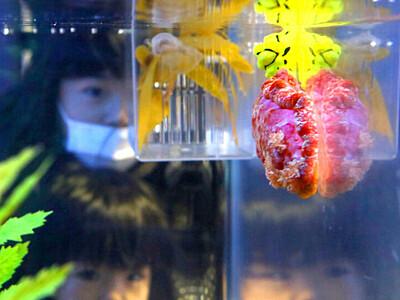 丑年にちなんで きもかわウミウシ 長岡・寺泊水族博物館