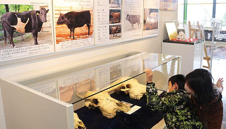 干支「うし」や、牛にちなんだ名前の生き物などをパネルや標本で展示している館内