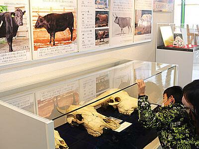干支にちなんだ生き物パネル展示 富山市科学博物館