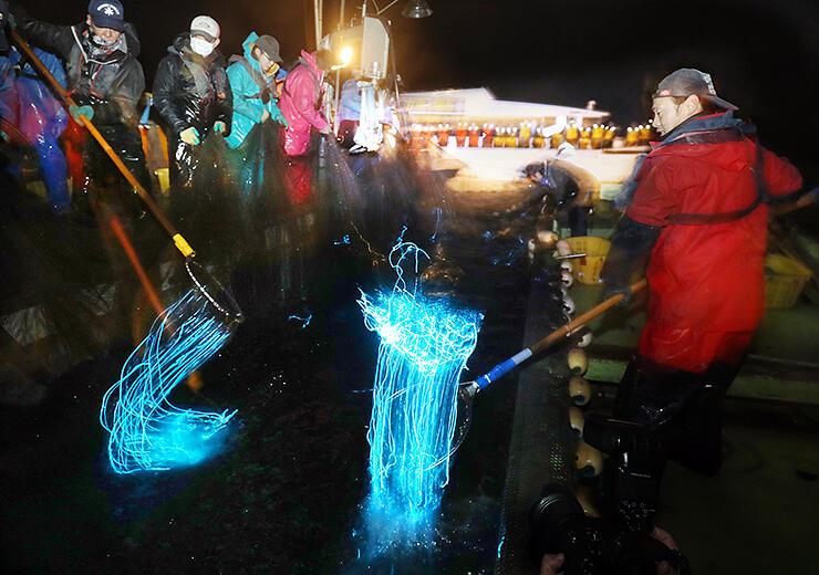 一昨年の海上観光で、多くの観光客の前で行われたホタルイカ漁