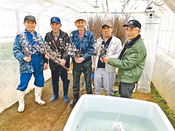 啓翁桜の栽培に取り組む「いぶき会」のメンバー=南砺市小又