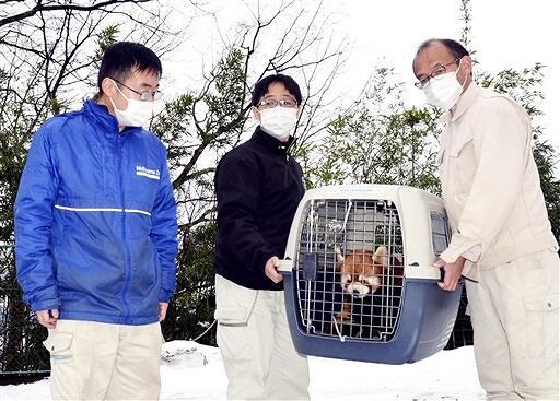 ムータンを運ぶ鯖江市西山動物園の職員ら=1月18日、同動物園