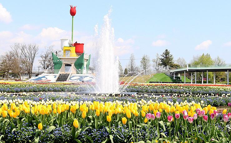 新型コロナのためチューリップフェアが中止された砺波リューリップ公園=昨年4月27日