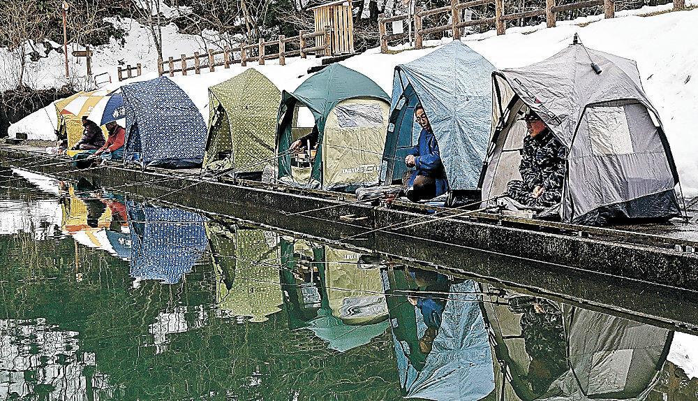 テントを構え、ヘラブナ釣りを楽しむ人=能美市の和気の池