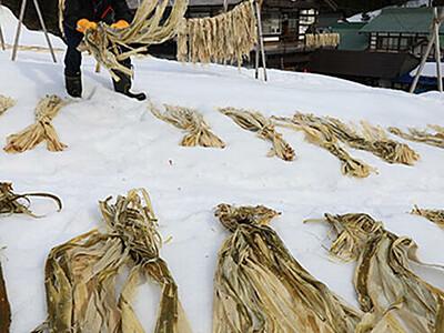 雪の上 コウゾも白く 五箇山和紙の原料を「雪ざらし」