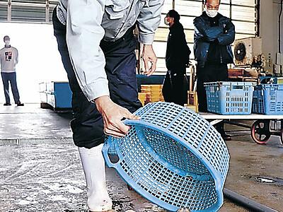 トリガイ漁、4月18日解禁 七尾湾、資源量は増加