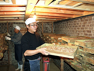 伝統のしょうゆ寒仕込み レンガ造りの麹室で作業