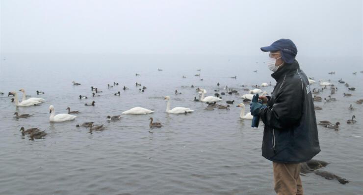 コハクチョウの飛来数を数える白田さん=27日午前6時58分、岡谷市の横河川河口