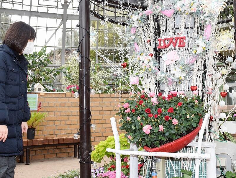 バラでハート形を作った「恋人ガーデン」=福井県坂井市の県総合グリーンセンター展示温室