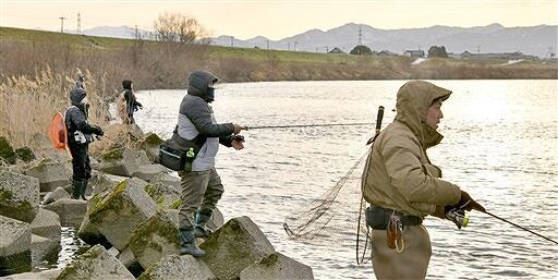 解禁となったサクラマス釣りを楽しむ人たち=2月1日午前7時40分ごろ、福井県福井市六日市町の九頭竜川