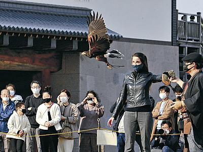 タカ狩り、妙技に沸く 金沢城公園で放鷹術披露