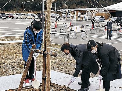 イカの駅にシダレザクラ 能登・小木小児童が植樹式