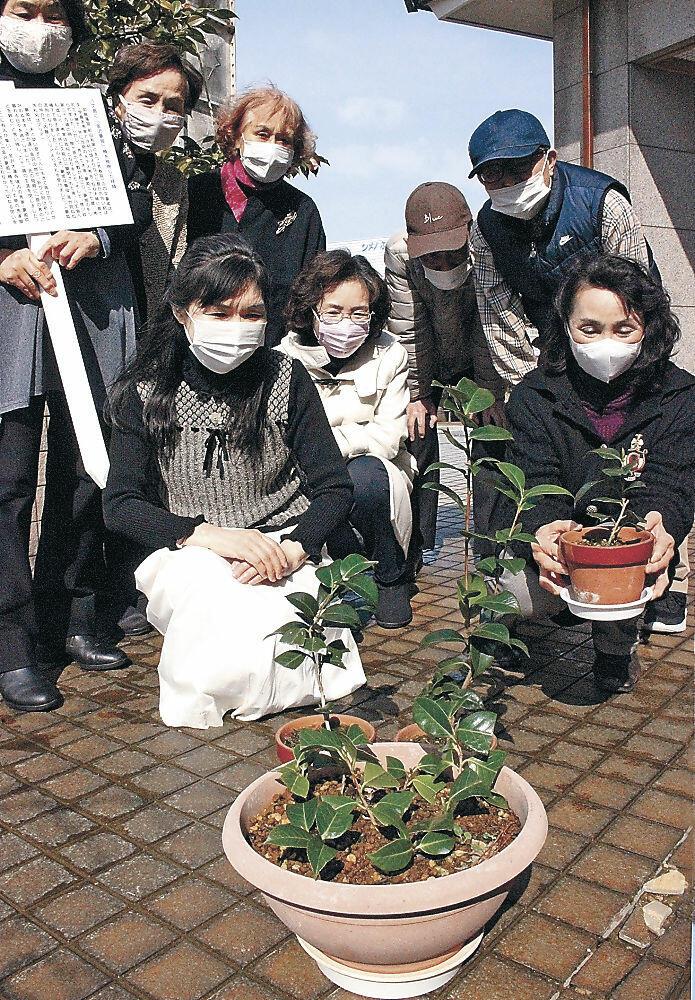植樹できる大きさに育ったツバキをいとおしげに見つめる岡崎さん(前列左)と寺内さん(同右)=金沢市中央公民館彦三館