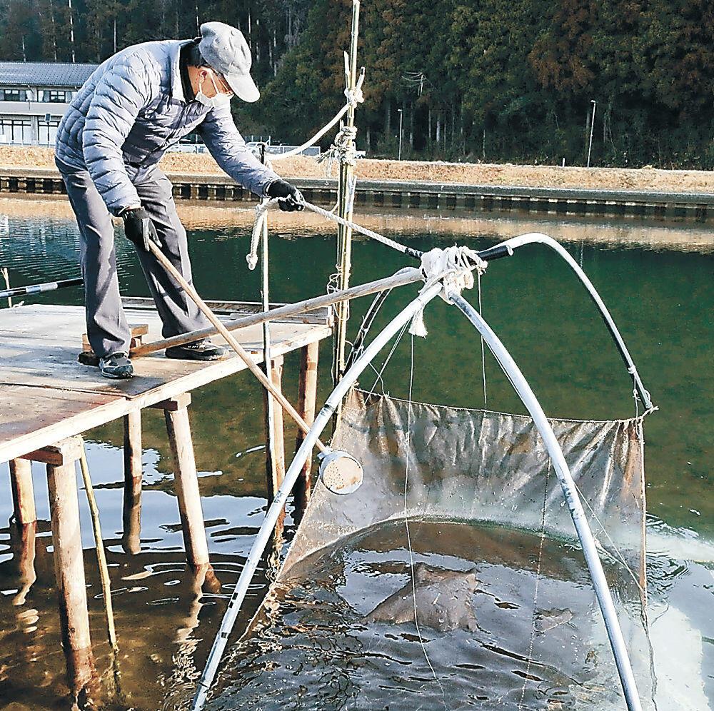 伝統の四つ手網で初物をすくい上げる住民=穴水町川島の小又川