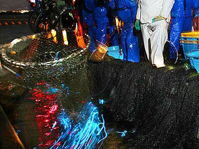 ホタルイカ漁解禁 滑川で初日127キロ