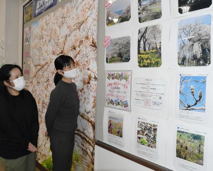 岡谷駅構内に掲示された岡谷の春を紹介する写真