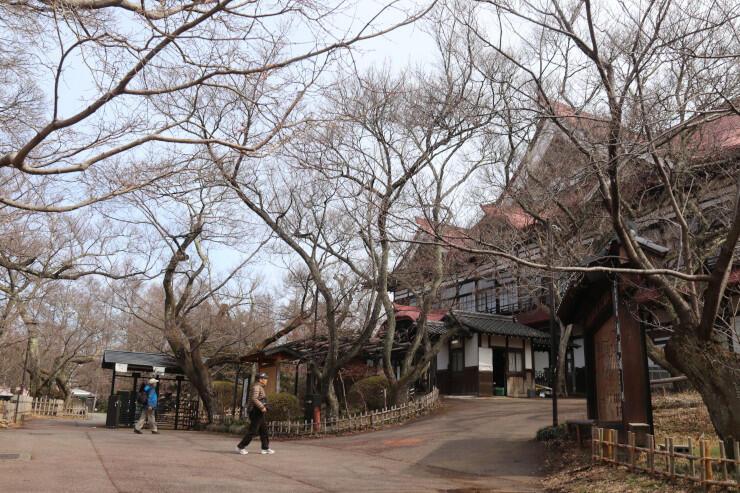 伊那市が2年ぶりに開催を決めた「さくら祭り」会場の高遠城址公園=9日