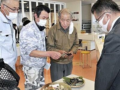 養殖マガキ、身ぎっしり 小浜湾で新方式試験、お披露目